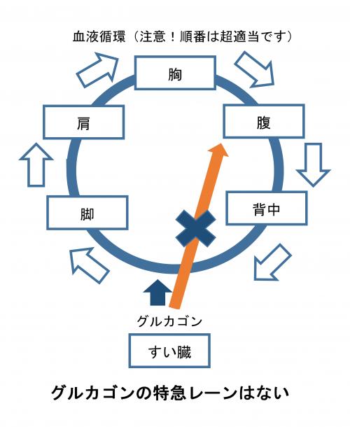 グルカゴン循環